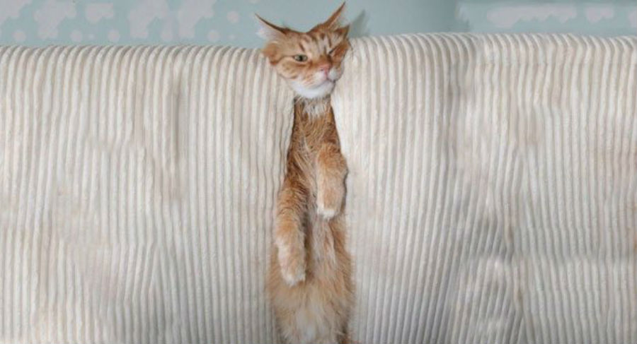 skuiiiiized-cat1